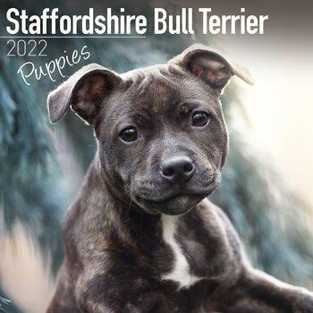 Calendar 2022 Staffordshire Bull Terrier Pups