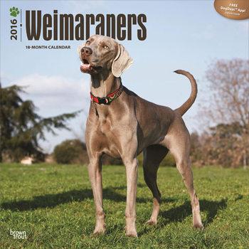 Calendar 2016 Weimaraners