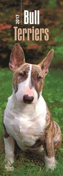 Bull Terriers Calendrier 2017