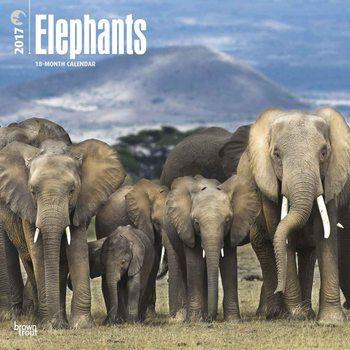 Elephants Calendrier 2017