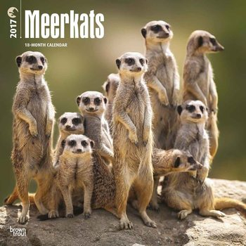 Meerkats Calendrier 2017