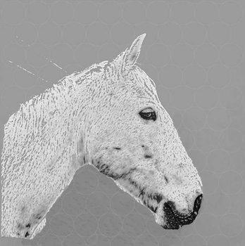 A horse name Sucré, 2015 Canvas Print