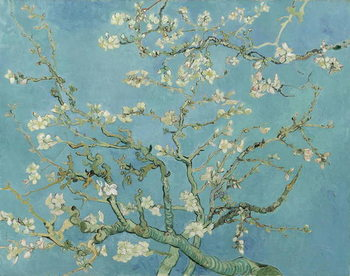 Almond Blossom, 1890 Canvas Print