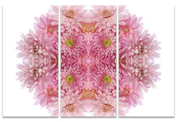Alyson Fennell - Pink Chrysanthemum Explosion Canvas Print