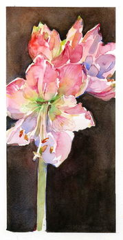 Amaryllis with brown background, 2015, Canvas Print