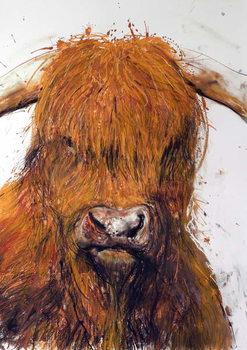 Angus, 2013, Canvas Print