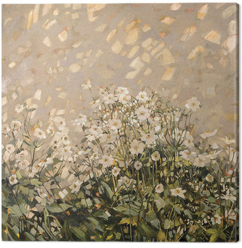 Anne-Marie Butlin - Morning Sun on Japanese Anemones Canvas Print