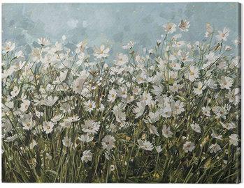 Canvas Print Anne-Marie Butlin - White Cosmos