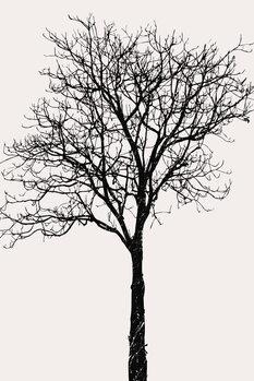 Black Birch Canvas Print