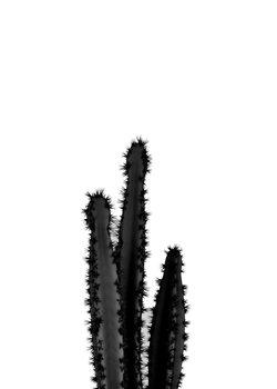 BLACK CACTUS 4 Canvas Print