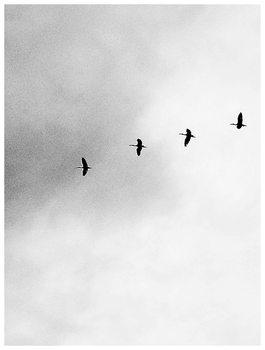 Border four birds Canvas Print