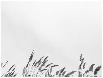 border grass top Canvas Print