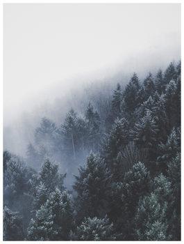 bordertreevalley Canvas Print