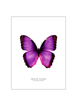 Canvas Print butterfly 2