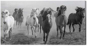 Canvas Print Carys Jones - Dusty Plains