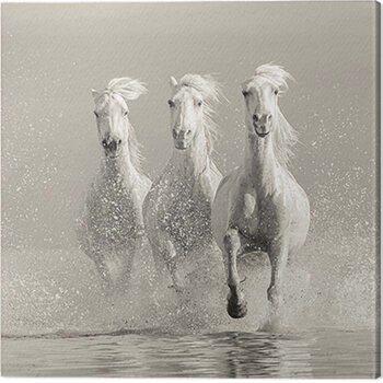 Canvas Print Carys Jones - Three White Horses