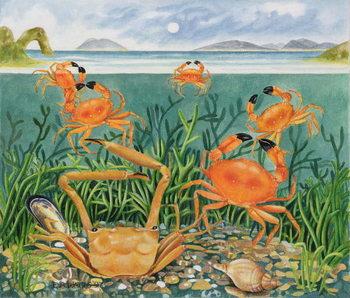 Crabs in the Ocean, 1997 Canvas Print