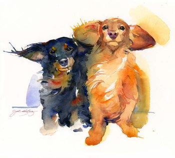 Canvas Print Dacshund Duo, 2014,