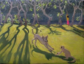 Dog and Monkey, Sri Lanka,1998 Canvas Print