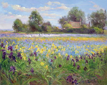 Canvas Print Farmstead and Iris Field, 1992