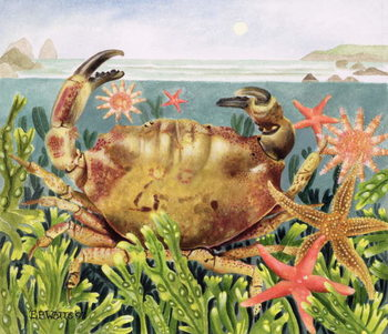 Furrowed Crab with Starfish Underwater, 1997 Canvas Print