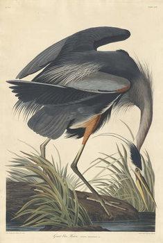 Great blue Heron, 1834 Canvas Print