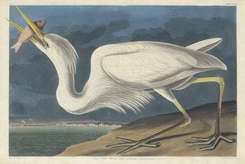 Great White Heron, 1835 Canvas Print