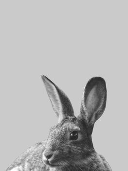 Canvas Print Grey rabbit