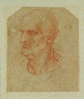Head of a beardless old man, left profile Canvas Print