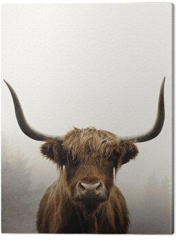 Canvas Print Ian Winstanley - Douglas