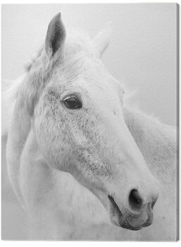 Canvas Print Ian Winstanley - Nordic Horse II