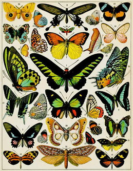 Illustration of Butterflies and moths c.1923 Canvas Print