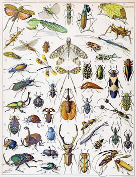 Illustration of  Insects c.1923 Canvas Print