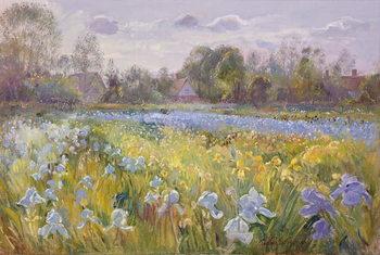 Iris Field in the Evening Light, 1993 Canvas Print
