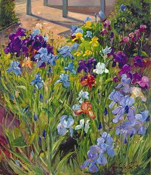 Irises and Summer House Shadows, 1996 Canvas Print