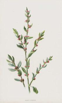Knot-Grass Canvas Print