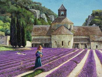 Lavender Picker, Abbaye Senanque, Provence Canvas Print