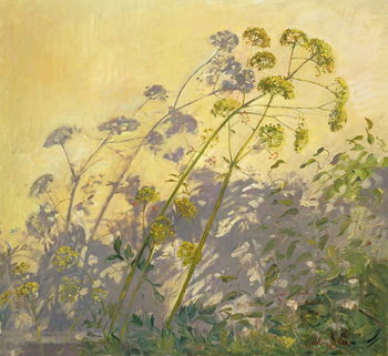 Lovage, Clematis and Shadows, 1999 Canvas Print