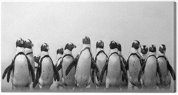 Canvas Print Marina Cano - Cape Town Penguins
