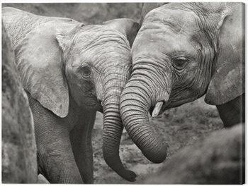 Canvas Print Marina Cano - Elephants in Love
