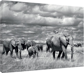 Canvas Print Marina Cano - Elephants of Kenya