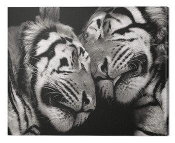 Canvas Print Marina Cano - Sleeping Tigers