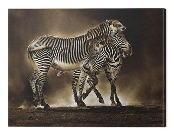 Canvas Print Marina Cano - Zebra Grevys