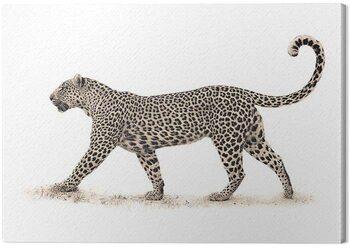 Canvas Print Mario Moreno - The Leopard