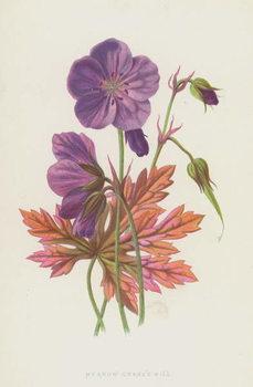 Meadow Crane's Bill Canvas Print