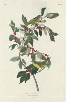 Nashville Warbler, 1830 Canvas Print