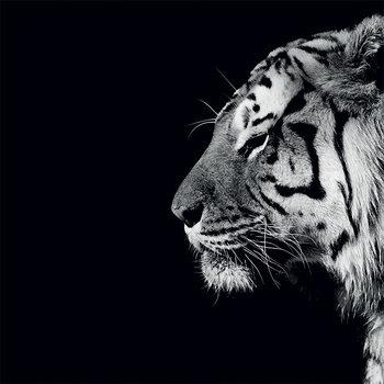 Nicolas Evariste - Panthera Tigris Canvas Print