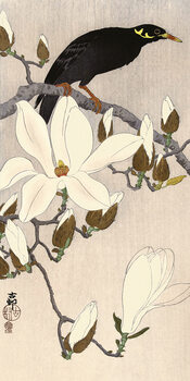 Canvas Print Ohara Koson - Myna on Magnolia Branch