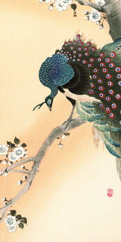 Canvas Print Ohara Koson - Peacock on a Cherry Blossom Tree