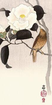 Canvas Print Ohara Koson - Songbird and Flowering Camellia